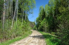 Dirt road in forest, spring time Royalty Free Stock Image