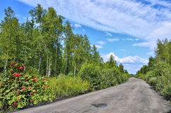 Dirt road through the forest - summer landscape Royalty Free Stock Photos