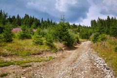 Dirt road in the forest Royalty Free Stock Image