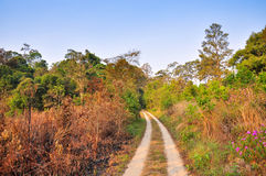 Dirt Road through the forest at Thung Salang Luang National Park Royalty Free Stock Image