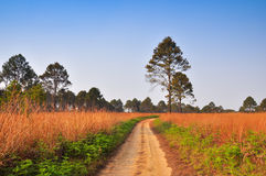 Dirt Road through the forest at Thung Salang Luang National Park Stock Photo