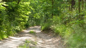 Dirt road in the forest. stock video footage