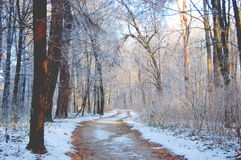 Dirt road in the forest in winter Royalty Free Stock Photography