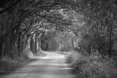 Dirt road. In the forrest, black / white stock photos