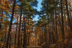 Dirt road in the forrest with fall colors. Royalty Free Stock Image