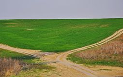 A dirt road goes in spring green field to the horizon stock images