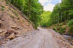 Dirt road through the forest Royalty Free Stock Photos
