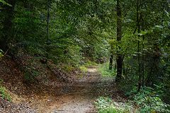 Dirt road. An dirt road going through the woods in a rural tqwn Stock Image