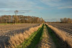 Dirt road with grass through plowed fields, a copse with trees without leaves and clouds on a sky. Dirt road with grass through plowed fields, a copse with trees stock photography