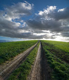 Dirt Road And Green Field At The Sunset Royalty Free Stock Photos