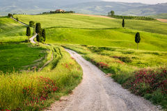 Dirt road and green field in Tuscany Stock Photography