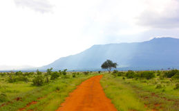 Dirt road in green fields Royalty Free Stock Photos