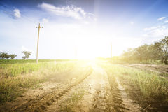 Dirt road through the green fields. Stock Image