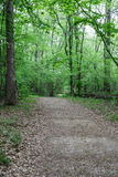 Dirt Road Through Green Forest Stock Image