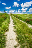 Dirt road between green hills in Tuscany Stock Images