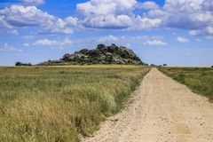 Dirt road with green long grass either side royalty free stock photo