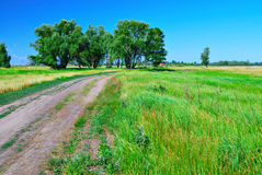Dirt road in green meadow and trees Stock Photos