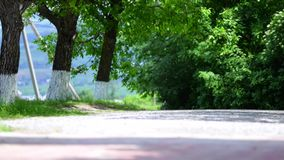 Dirt road in green meadow and trees on sky background stock video