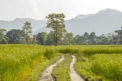A dirt road in green rice fields against a background of forest, mountains and houses stock photography