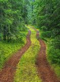 A dirt road in a green spruce forest.n Royalty Free Stock Photo