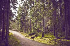 Dirt Road Green Trees Forest Hiking Trail Royalty Free Stock Photography