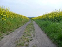 Dirt road in the green and yellow fields Royalty Free Stock Photo