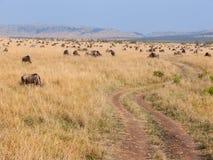 Dirt road through herd of wildebeest in Masai Mara Stock Image