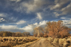 Dirt Road in Evening Royalty Free Stock Image