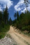 Dirt road high in the mountains among the tall pine trees against the blue sky. royalty free stock photo