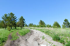 A dirt road on a hill in a summer sunny forest Royalty Free Stock Photos