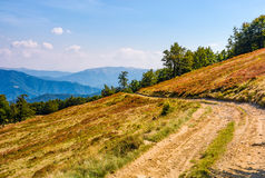 Dirt road through hillside with beech forest. Gorgeous scenery of mountain ridge and grassy slopes in fine autumn afternoon weather Royalty Free Stock Photo