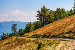 Dirt road through hillside with beech trees. Spectacular scenery of mountain ridge and grassy slopes in fine autumn afternoon weather Stock Photo