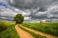 Dirt road. Hot June day in the fields by linden Stock Images