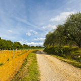 Dirt Road in Italy Royalty Free Stock Photos