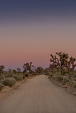 Dirt Road Through Joshua Tree at Dusk stock photos
