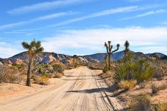 Dirt Road Joshua Tree Royalty Free Stock Image