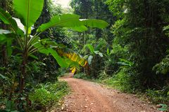 Dirt road in jungle Stock Photography
