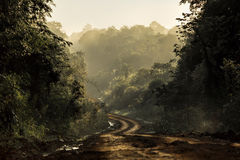 Dirt road in the jungle. With luxuriant vegetation Royalty Free Stock Photos