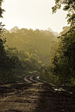 Dirt road in the jungle. With luxuriant vegetation Stock Images