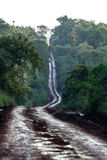 Dirt road through the jungle. Dirt road through the sub tropical rain forest in Argentina royalty free stock images