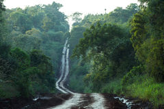 Dirt road through the jungle. Dirt road through the sub tropical rain forest in Argentina Stock Images