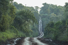 Dirt road through the jungle. In the sub tropical region from Argentina Stock Photo