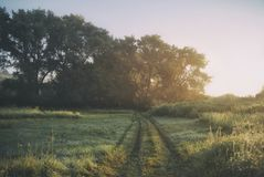 A dirt road and large poplars in the morning light.  Stock Image