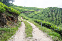 Dirt Road Lead To Tea Plantation. At Cameron Highlands, Malaysia Royalty Free Stock Photo