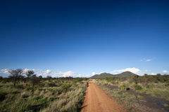 Dirt road leading into the African bush. A dirt track into the wilderness of the Madikwe Game Reserve, South Africa, under clear blue skies stock photography