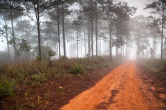 Dirt road leading through the early spring forest. On a foggy morning Royalty Free Stock Photography