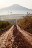 Dirt road leading through the early spring forest on a foggy Royalty Free Stock Image