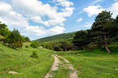Dirt road leading into a forest. Under blue skies with fluffy white clouds Royalty Free Stock Images