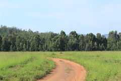 Dirt road leading into forest in Mlilwane, Swaziland, Africa Royalty Free Stock Images