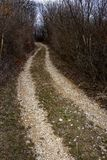 Dirt road leading through the forest royalty free stock photography